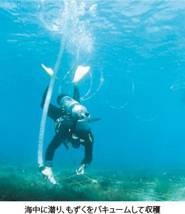 海中に潜り、もずくをバキュームして収穫