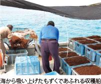海から吸い上げたもずくであふれる収穫船
